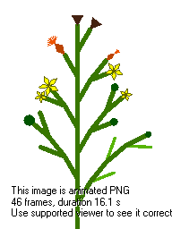 Animated growing Mycelis Muralis